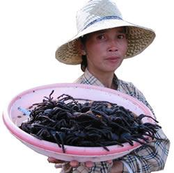 aranha frita - Camboja