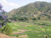 Plantação em Uttaranchal